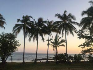 palm trees in Santa Catalina