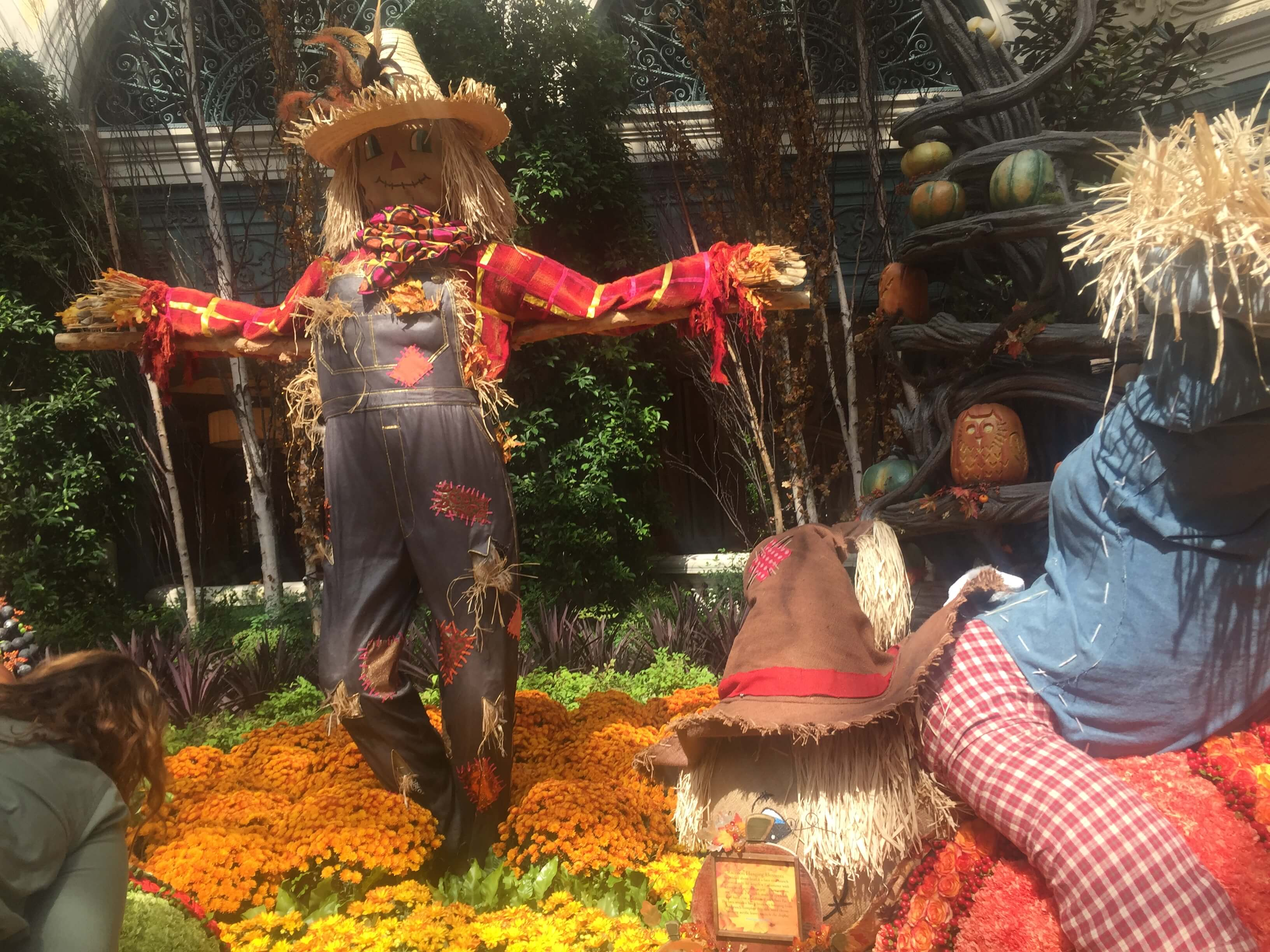 Fall Display at The Botanical Gardens at The Bellagio