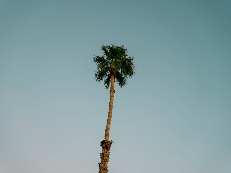 a picture of a palm tree