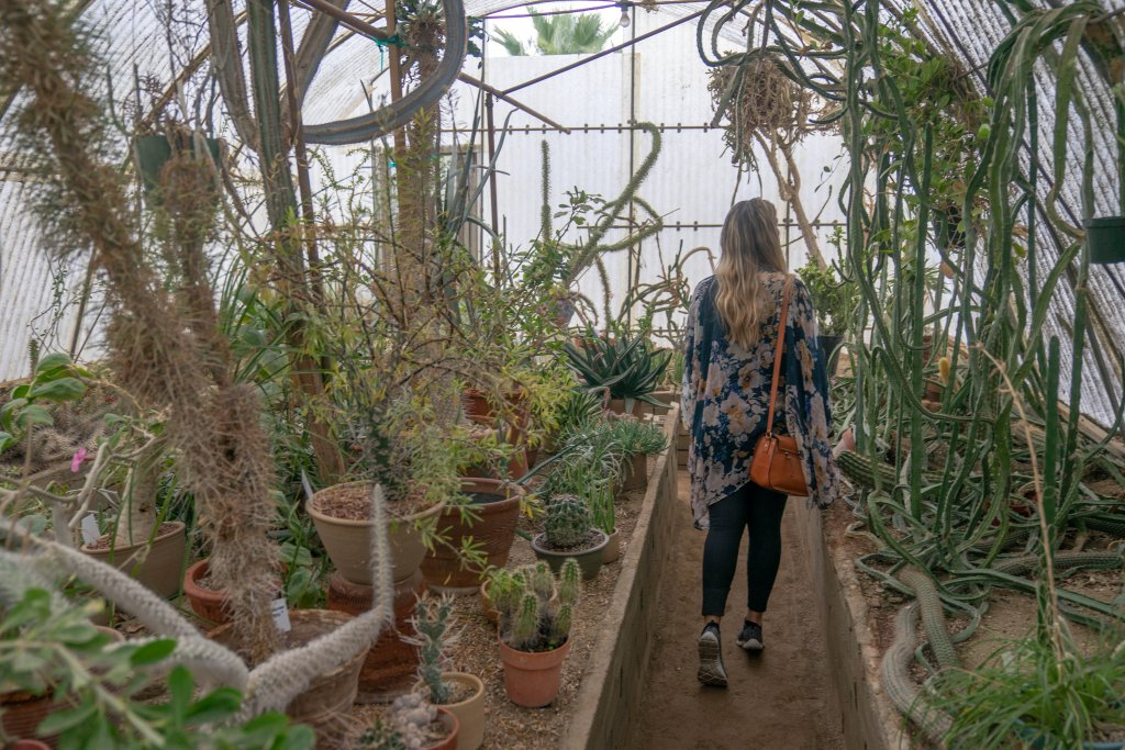 a women walking through a nursery at Moorten Botanical Gardens
