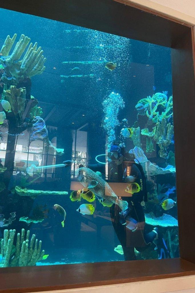 fish in an aquarium at the 'Alohilani Resort